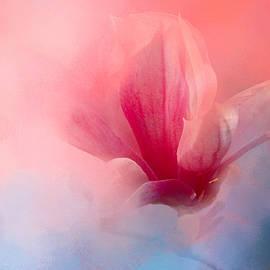 Jai Johnson - Spring Tulip Magnolia