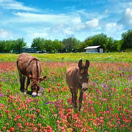 Lynn Bauer - Spring Wildflower Feast