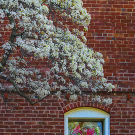 Mitch Shindelbower - Spring Window