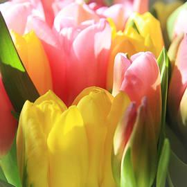 Lali Kacharava - Springs bouquet