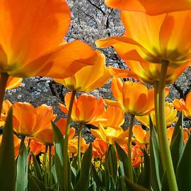 Dan Myers - Springtime At Longwood Gardens 2015