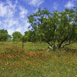 Lynn Bauer - Springtime Beauty in the Hill Country