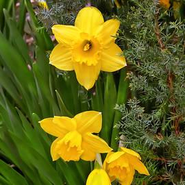 Bijan Pirnia - Springtime Can Be Yellow
