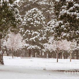 John Bartelt - Springtime Snowstorm