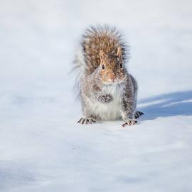 Karol Livote - Squirrel And His Shadow