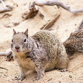 Squirrel Curiosity