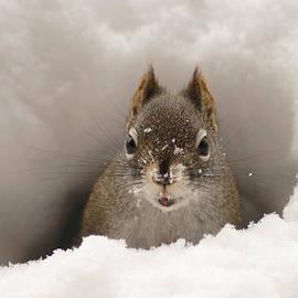 Stanza Widen - Squirrel In A Snow Tunnel