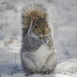 Rima Biswas - Squirrel in snow