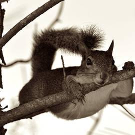 Elizabeth Abbott - Squirrel Just Hanging Out