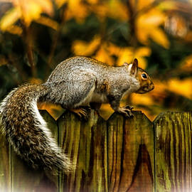 Olahs Photography - Squirrel
