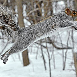 Asbed Iskedjian - Squirrel tail, curved tail