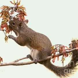 Myrna Bradshaw - Squirrel with a treat