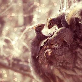 Aurelio Zucco - Squirrels - A Family Affair II