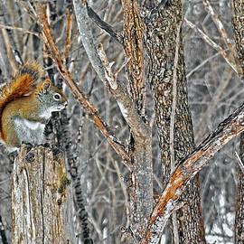 Asbed Iskedjian - Squirrel
