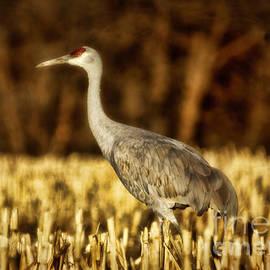 Janice Rae Pariza - Stalking The Cornfields