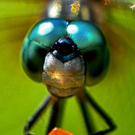 George Bostian - Stare Down With A Dragonfly 001