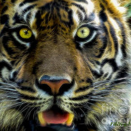 rdm-Margaux Dreamations - Stared Down by a Tiger