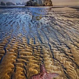 Debra and Dave Vanderlaan - Starfish at Low Tide