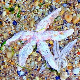 Ed Weidman - Starfish