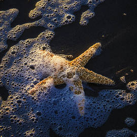 Starfish In Sea Foam - Garry Gay