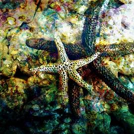 Barbara Chichester - Starfish In Waterscape