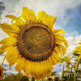 Janice Rae Pariza - Staring At The Sun