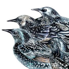 Marie Burke - Starlings