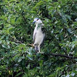 Karen Silvestri - Stepping Lightly on a Branch