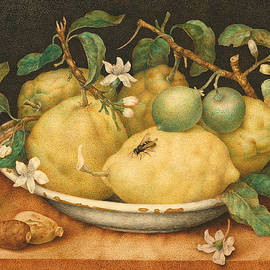 Still Life with a Bowl of Citrons - Giovanna Garzoni