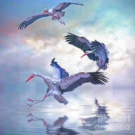 Brian Tarr - Storks Landing