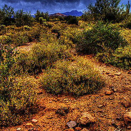 Roger Passman - Storm Clouds over the Sonoran Desert in Spring