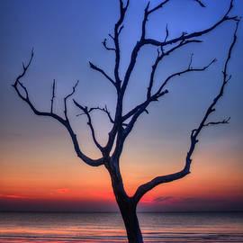 Reid Callaway - Stranded Driftwood Beach Sunrise Jekyll Island Georgia
