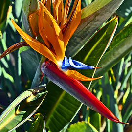 Andy Za - Strelitzia. Island Of Love.