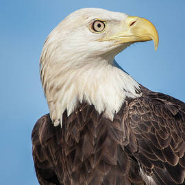 Dawn Currie - Strength and Determination