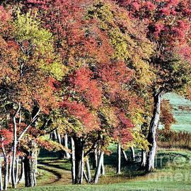 Janice Drew - Striking Fall Color