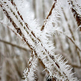 Carol Groenen - Striking Hoarfrost