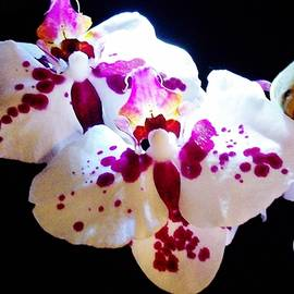 Sharon Ackley - Stunning Twin Orchids