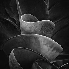 Mike Nellums - Succulent Plant BW