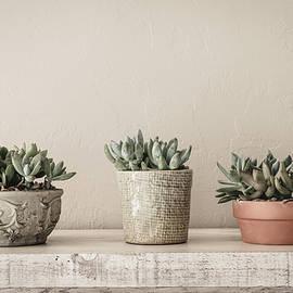 Kim Hojnacki - Succulents in Pots
