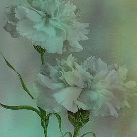 Sarah Vernon - Such Serviceable Flowers