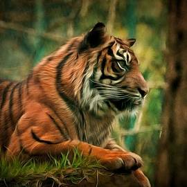 Scott Carruthers - Sumatran tiger