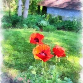 Maciej Froncisz - Summer Backyard Poppies