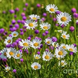 Veikko Suikkanen - Summer blooms