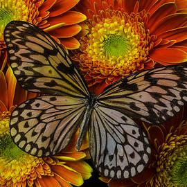 Summer Butterfly - Garry Gay