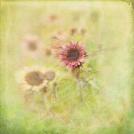 Susan Capuano - Summer Fields