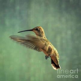 Janice Rae Pariza - Summer Hummingbird