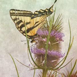 Angie Vogel - Summer Nature