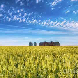 Summer On The Prairies - Ian McGregor