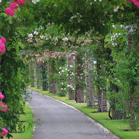 Rumyana Whitcher - Summer Pathway of Roses