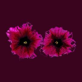 Dave Byrne - Summer Petunias